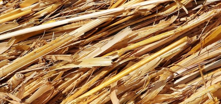 Növényi maradványok szerepe a tápanyag-gazdálkodásban